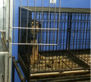 Photo of puppy in confined space (Courtesy Humane Society)